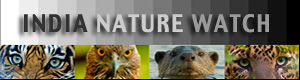 India Nature Watch Forum Index