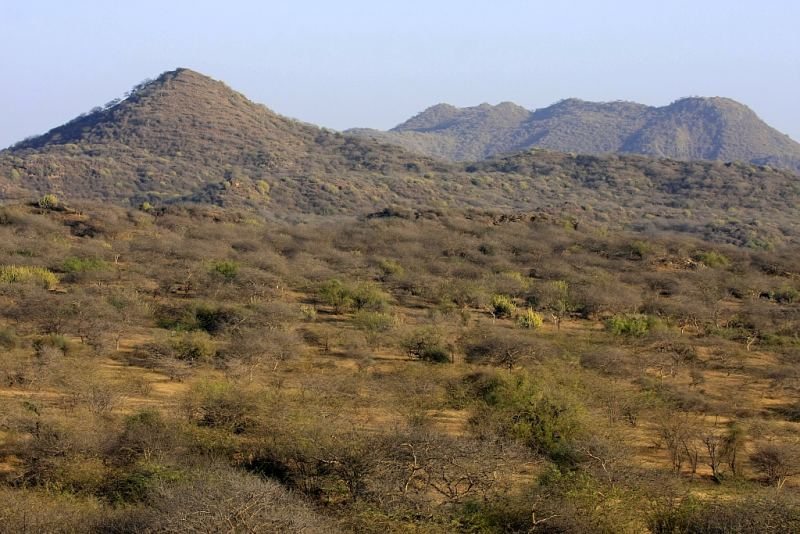 Your trail: > Home > Tropical Thorn forest of Kutch