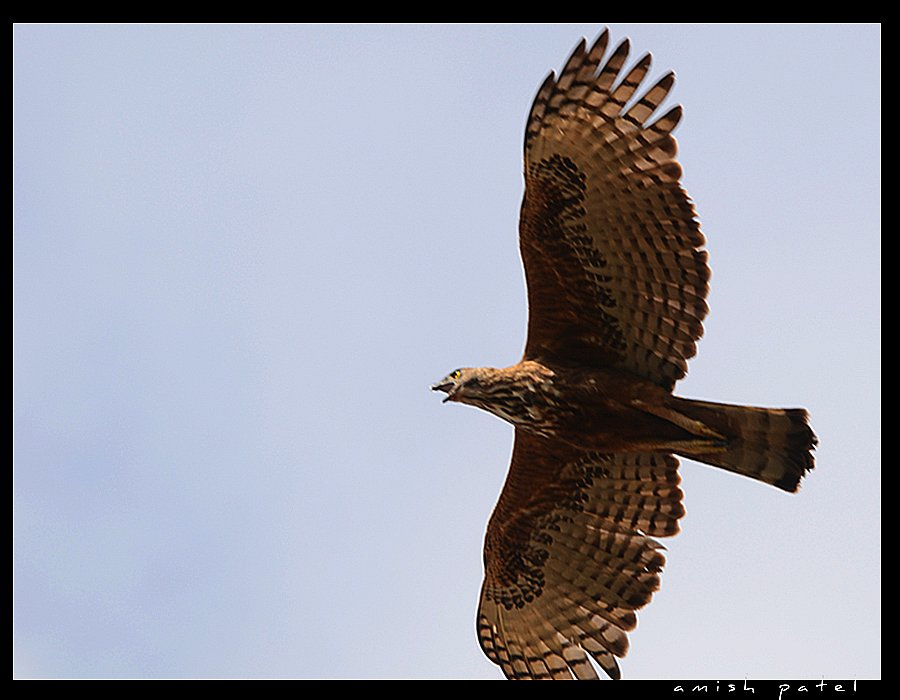 happy world photography day changeable hawk eagle thnx rohan poster