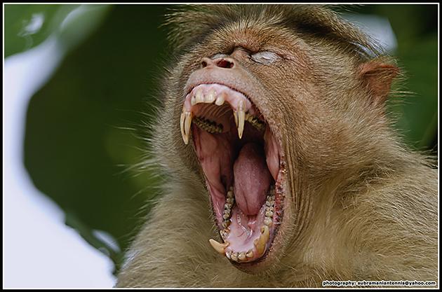 Image Gallery Scary Monkey